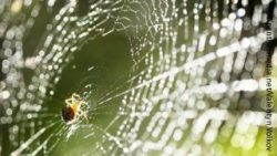 Image: A spider sitting in its web; Copyright: panthermedia.net/Valentyn Volkov