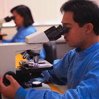 Photo: A person investigates something with the microscope