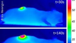 Image: Infrared images of a nanotube-injected tumor; Copyright: Iris Marangon