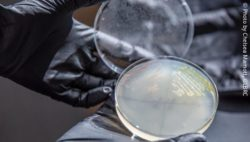 Image: hands holding a petri dish with microbes; Copyright: Photo by Chelsea Mamott, GLBRC