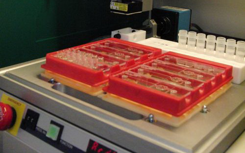 Photo: Application of capture molecules on a chip