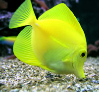 Photo: A tropical fish