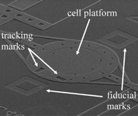 "Electron micrograph of the ""cell puller"""
