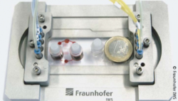 Image: Chip with two seperate microcirculations. Next to it lies a one euro coin as a reference size; Copyright: Fraunhofer IWS