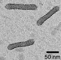 Electron microscope image: Cylinders of gold nanoparticles