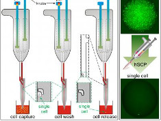Graphic: New pipette dispensing single cells