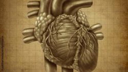 Image: illustration of a human heart on bleached paper; Copyright: panthermedia.net/lightsource