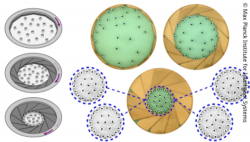 Image: various green, brown and grey round schemes; Copyright: Max Planck Institute for Intelligent Systems