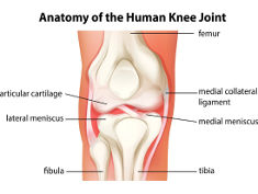 Photo: Knee joint