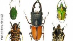 Image: different beetles in a row; Copyright: panthermedia.net / Kesu01