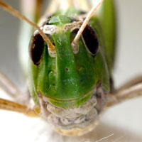 Photo: Face of cicada from very near