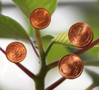 Photo: A small tree with Euro-cents sticking to it