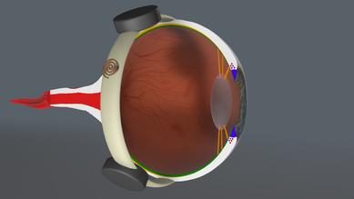 Cross-section of the eye with the implant in position