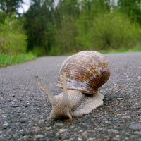 Photo: A snail on a road