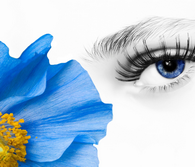 Photo: Blue flower and human eye
