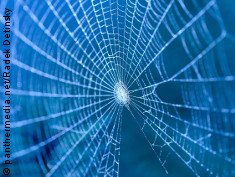 Photo: Spider web