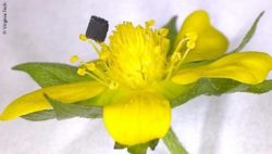 Image: 3D-printed flower; Copyright: Virginia Tech