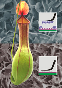 Photo: Pitcher plant superposed by graphics