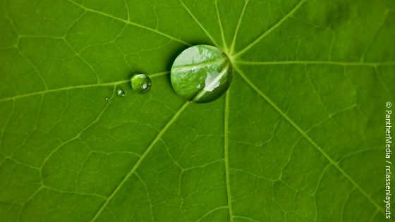 Image: a green leaf with some water drops on it; Copyright: PantherMedia/rclassenlayouts