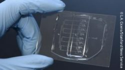 Image: Microfluidic Guillotine; Copyright: L.A. Cicero/Stanford News Service