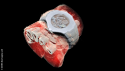 Image: 3D image of a wrist with a watch showing part of the finger bones in white and soft tissue in red; Copyright: MARS Bioimaging Ltd