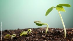 Image: picture of a plant in four different growth stages; Copyright: panthermedia.net/eskaylim
