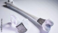 Image: 3D printed element of a bone; Copyright: RMIT University