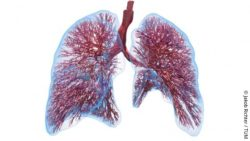 Picture: computer model of the lung; Copyright: Jakob Richter / TUM
