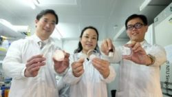 Image: scientists holding the various applications containing ANGPTL4, which included a sponge, filler, gel patch, paste, hydrogel and injection ; Copyright: NTU Singapore