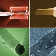 Photo: Four images taken by the electron microscope