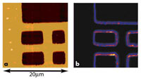 Atomic force microscope image (a) and SPIM image (b)